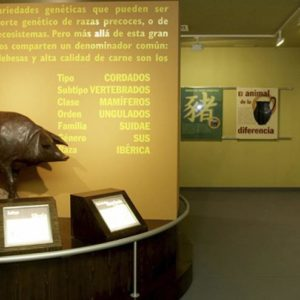 Museo del jamón interior